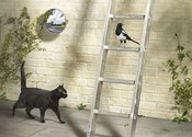 Main thumb a black cat ladder magpie 009